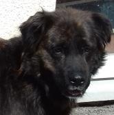 urgence pour 200 chiens et 50 chats  Refuge de Sotchi (Russie) Djek4-e1524495000561