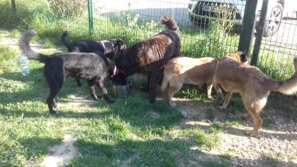 urgence pour 200 chiens et 50 chats  Refuge de Sotchi (Russie) Les-5