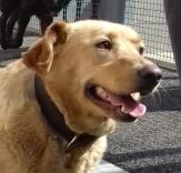 urgence pour 200 chiens et 50 chats  Refuge de Sotchi (Russie) Liza21-e1524494725433