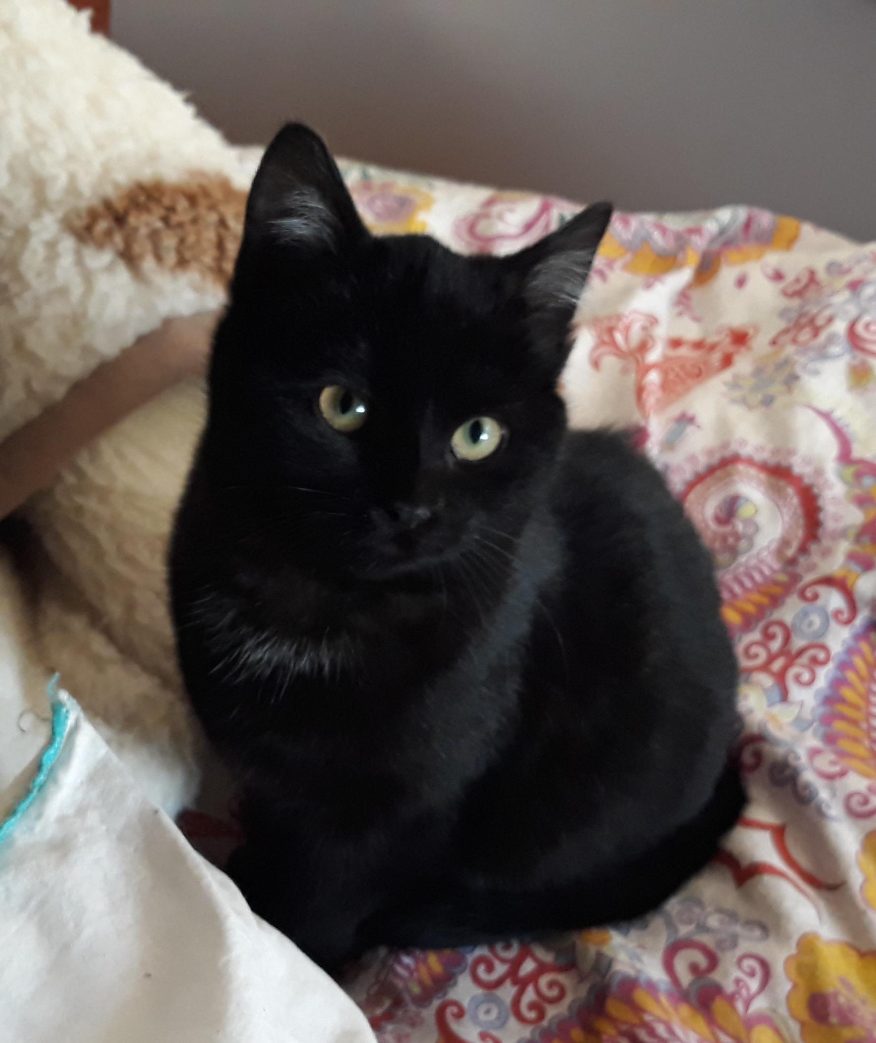 SerrГ© noir adolescent chatte pics